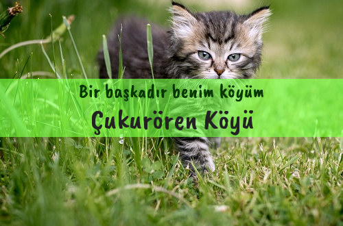 Çukurören Köyü