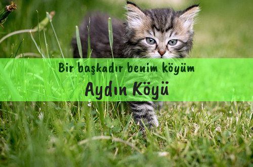 Aydın Köyü