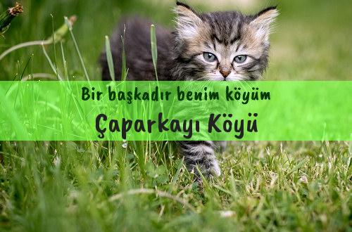 Çaparkayı Köyü