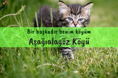 Aşağıalagöz Köyü