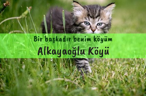 Alkayaoğlu Köyü
