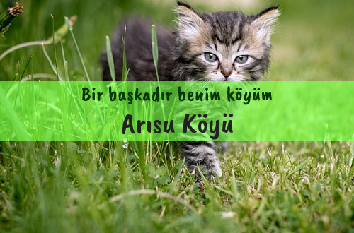Arısu Köyü