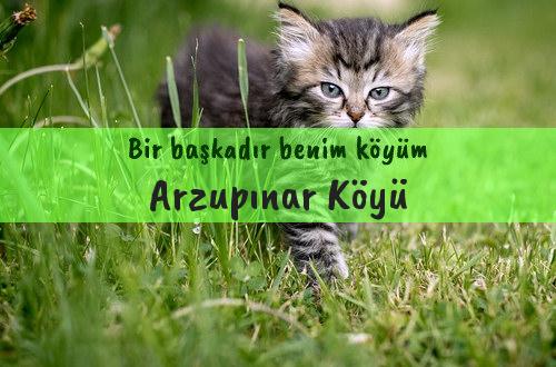 Arzupınar Köyü