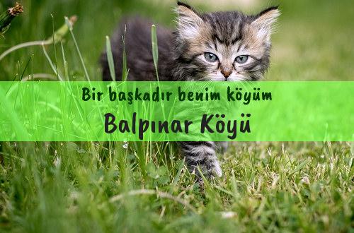 Balpınar Köyü