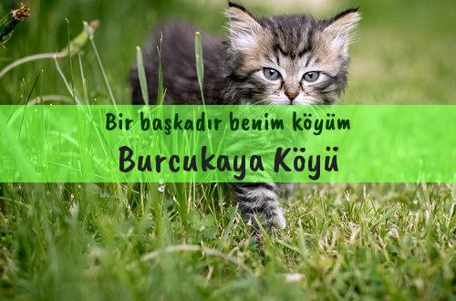 Burcukaya Köyü
