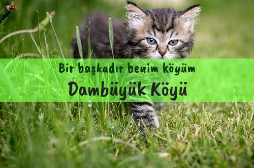 Dambüyük Köyü