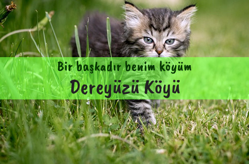 Dereyüzü Köyü