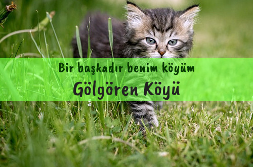 Gölgören Köyü