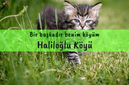 Haliloğlu Köyü