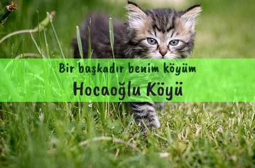 Hocaoğlu Köyü