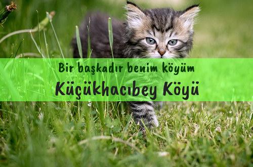 Küçükhacıbey Köyü