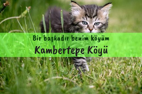 Kambertepe Köyü