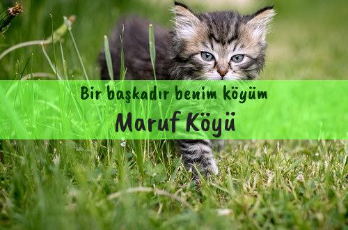 Maruf Köyü