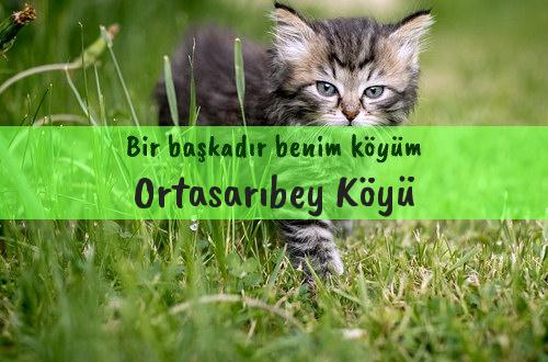 Ortasarıbey Köyü