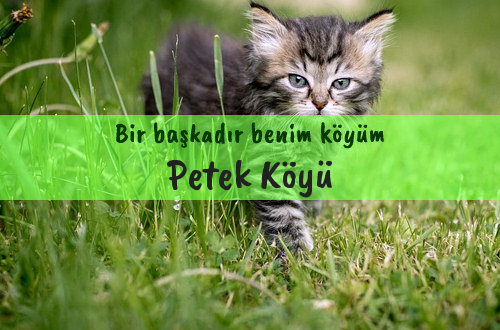 Petek Köyü