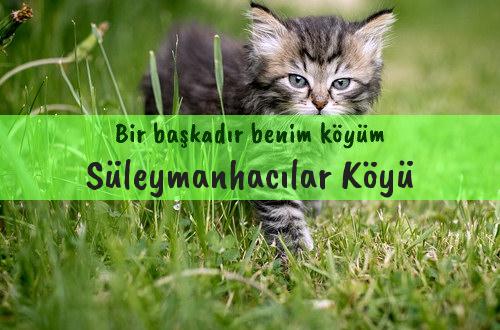 Süleymanhacılar Köyü