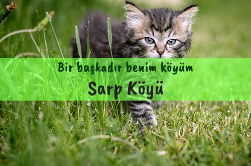 Sarp Köyü