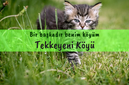 Tekkeyeni Köyü