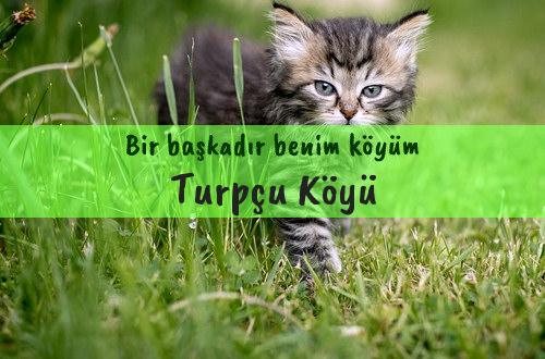 Turpçu Köyü