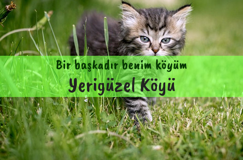 Yerigüzel Köyü